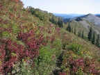 Huckleberries showing fall colors on the Bluff Mountain Trail near Silver Star Mountain.