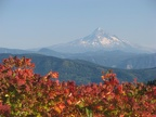 View of Mt. Hood from Bluff Mountain Trail.