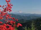 View of fiery Vine Maple and Mt. Hood from Bluff Mountain Trail.