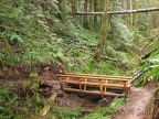 A pair of nice log bridges span this gulliey and stream about .75 mile from the trailhead of Central Gales Creek Trail.