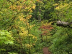 There are some great fall colors along the trail. Here the red of a dogwood tree brightens the trail.