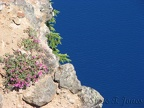 Penstemmons cling to the cliffs along Garfield Peak Trail in Crater Lake National Park.