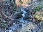Several small creeks cross the lower portions of the trail. This one is in a small gully.
