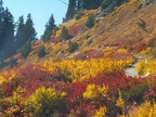 Willows and blueberriers showing fall colors on High Lakes Trail. Picture taken 9/27/2005 about 2pm.