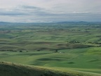 The fields of wheat, lentils, and soybeans are still green in early July. This view is looking southeast from Kamiak Butte over the Palouse.