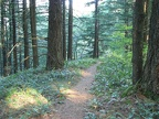 The Starvation Ridge Trail climbs through a pleasant second-growth forest.