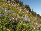 Naches Peak Trail