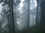Morning fog on the Nesmith Point Trail