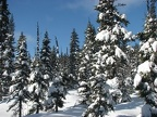 Snow blankets the firs and hemlock trees and any winds provide surprises to inattentive people who stand too close when snow sloughs off the treetops.