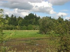 Marshes along the Salmon Creek Trail.