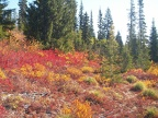Fall colors on the trail to Bench Lake