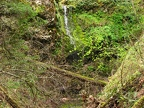 The only waterfall on this hike is a from a small stream along the Wygant Trail