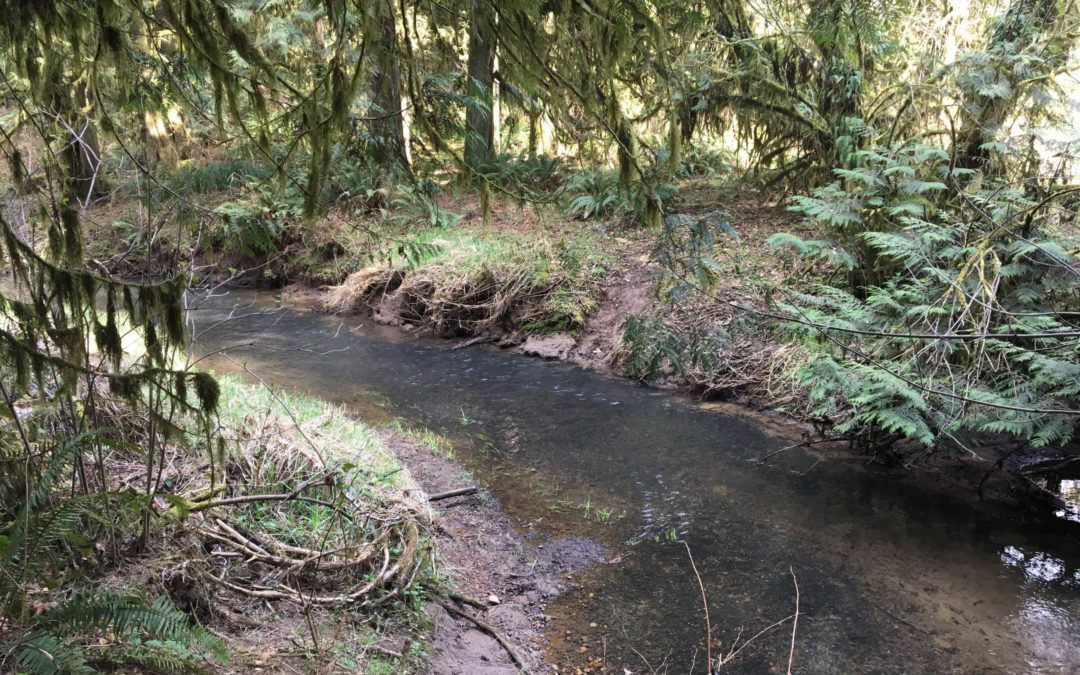 Salmon-Morgan Creeks, WA