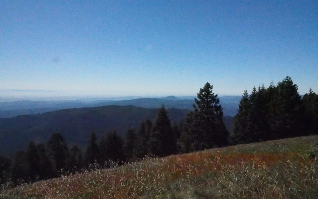 Marys Peak Trail, OR