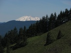 Mt. St. Helens can be easily seen from Dog Mountain on a nice day.