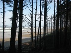 Douglas Fir and Sitka Spruce silhouetted against the Pacific Ocean at Cape Lookout State Park