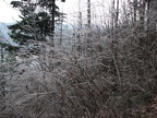 An early season ice storm has coated the bushes and trail on the Devil's Rest Trail.