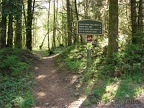 Here is a picture of the Pacific Crest Trail in Cascade Locks. The beginning of the trail is an easy walk up a gentle grade.