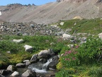 Several small streams provide just the thing for carpets of Monkeyflowers in Glacier Basin.