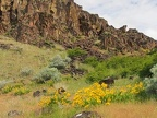 Spring flowers bloom in patches around Horsethief Butte.