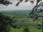 Looking out over the Palouse from a break in the pine trees.