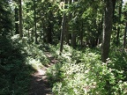 The lower portion of the Mazama Trail has dappled sunlight on the trail.
