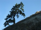 A lone tree survives at the edge of Starvation Ridge.