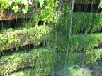 Water trickles down a moss-covered retaining wall descending down to Zigzag River.