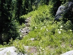 One of the less maintained sections of the trail near Olallie Lake on the PCT.