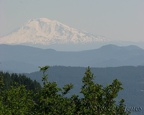 This trail has great views of Mt. Adams and Mt. Hood in many places.