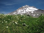 Paradise Meadows with Beargrass in July on Mt. Hood.
