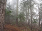 The hike started out with trees enveloped in fog.