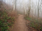 Winter fog on the Cape Horn Trail