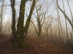 Winter fog makes ghostly scenes on the Cape Horn Trail.