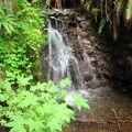 There are many seeps, several streams, and a few small waterfalls along the Gales Creek Trail.